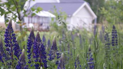 Invasiva främmande växter tas bara emot på Rönneholms avfallsanläggning!
