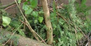 Klipp från träd, buskar och grenar.