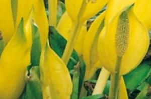 Bild på gula blommor.