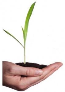 Bild på en hand, lite jord och en liten växt.